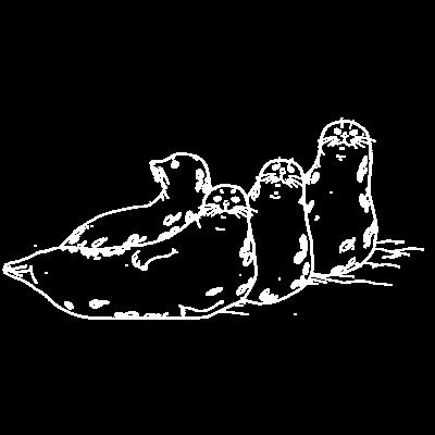 ゼニガタアザラシ
