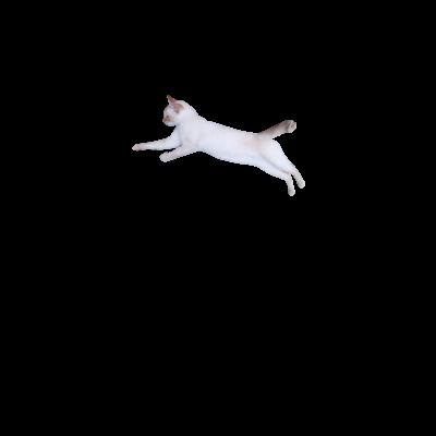 猫ちゃんグッズ