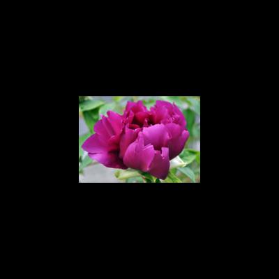 Japan 令和の花