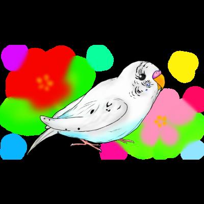 白ハルクインのピーコちゃん