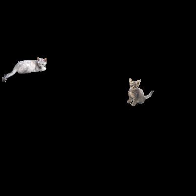 猫フォルダ