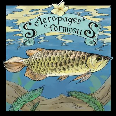 Scleropages formosus