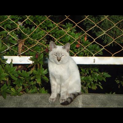 野良猫ちゃん達(^^♪