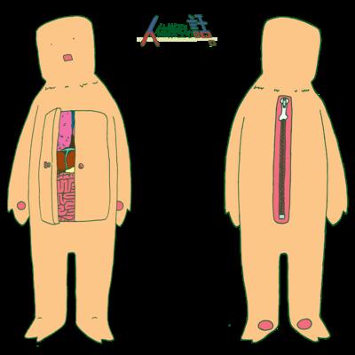 人体模型の話。