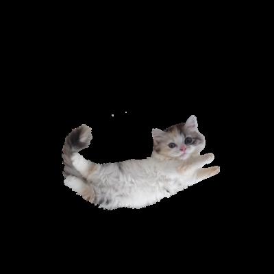 猫も飛べるはず