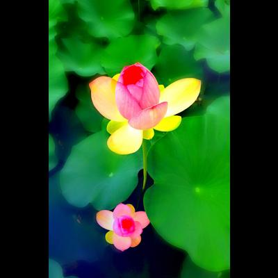 花・植物グッズ