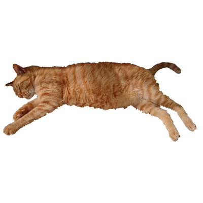 Ssleeping Ta-nan