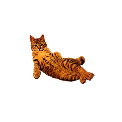 猫 / ネコ / ねこ / Cat / キャット