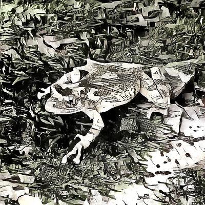 Fantastic Frog