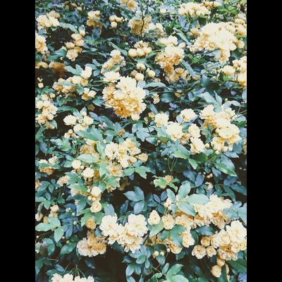 夢で触れた花。series