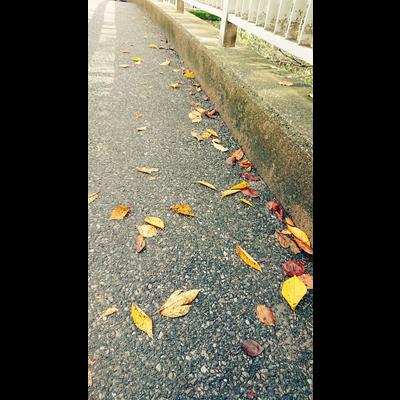 落ち葉たち。series