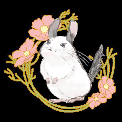 花チンチラちゃん