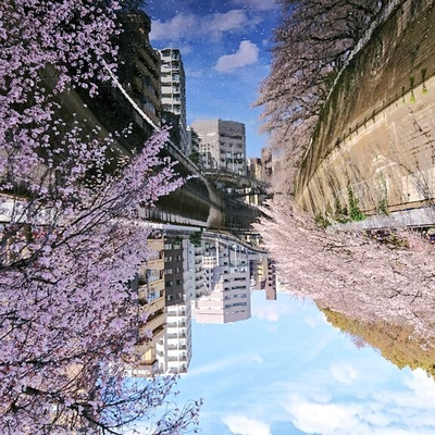 桜降る川空へ。