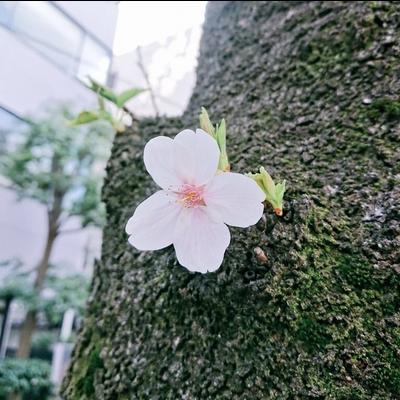 咲き誇れ、先の事など考えず。