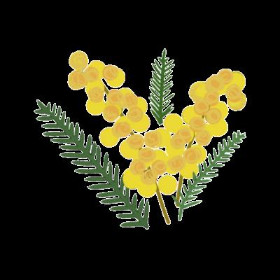 ミモザ・mimosa・🌿