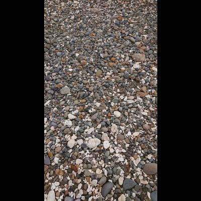 海辺の石たち。series