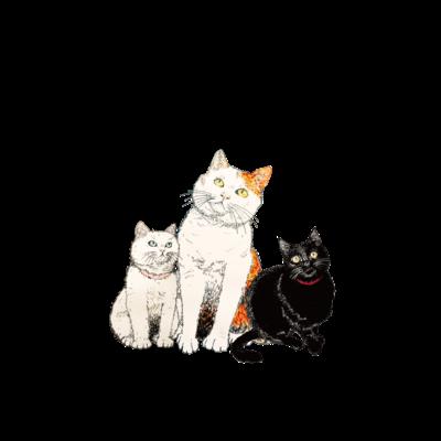 アリスのかわいい猫たち