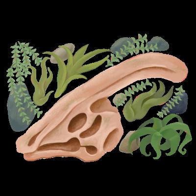きょうりゅう頭骨