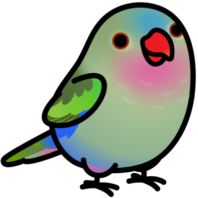 Chubby Bird 天女インコ テンニョインコ