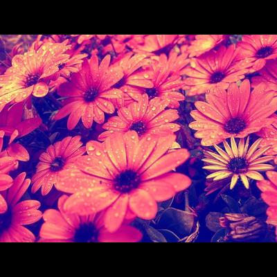 水滴つややくお花