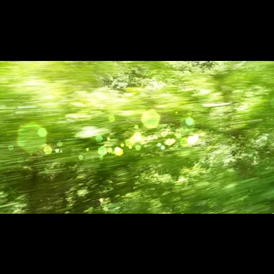 森へ(きらきら)