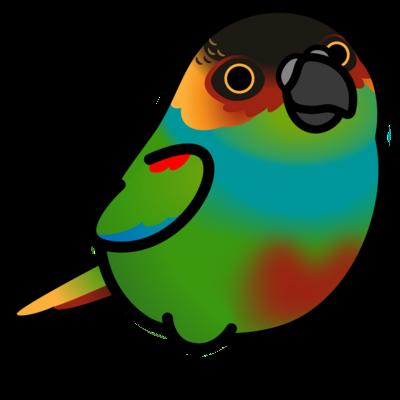 Chubby Bird アオマエカケインコ
