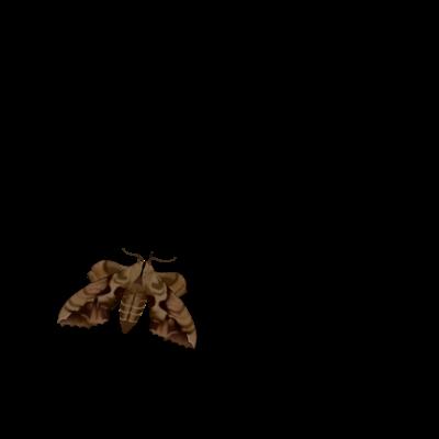 蛾とまってね?