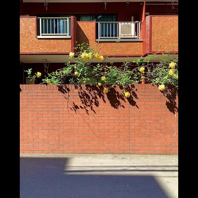 レモンローズパレス三軒茶屋
