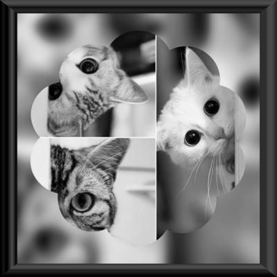 3匹の覗き見ニャンコ