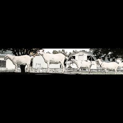 整列する山羊