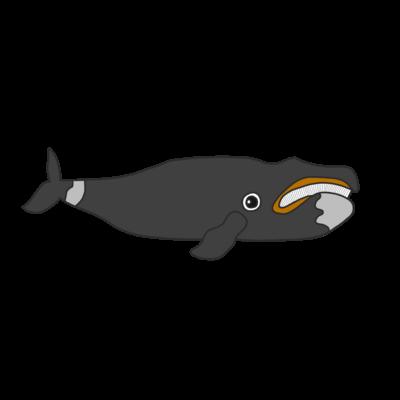 北極クジラ