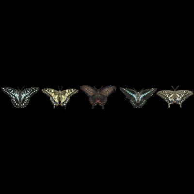 5種のアゲハ蝶