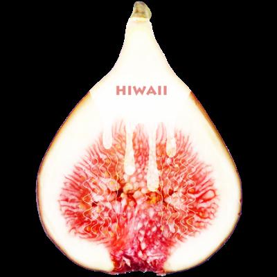 Hiwaiiシリーズ