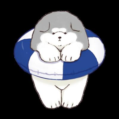 うきわマラミュート子犬