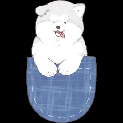 ポケットマラミュート子犬