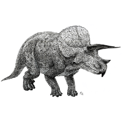 Triceratops(drawing)