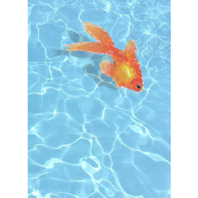 カクカク金魚