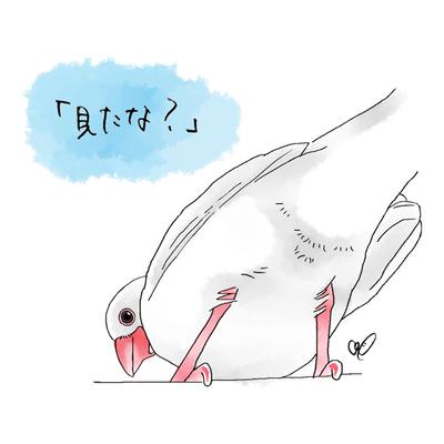 上から白文鳥