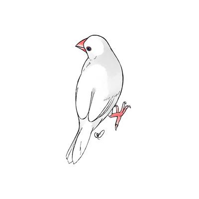 見返り白文鳥