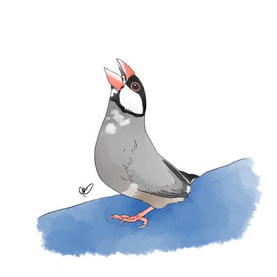 直角桜文鳥