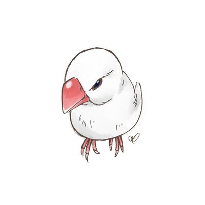 見下ろし白文鳥