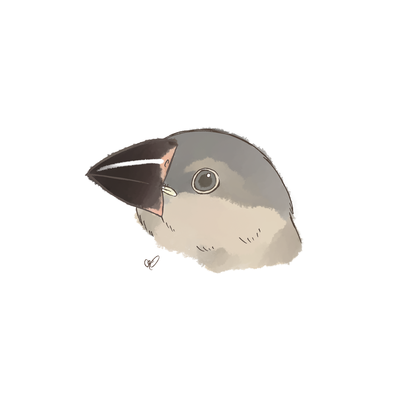 幼少期の桜文鳥
