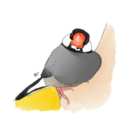 寄り添い桜文鳥