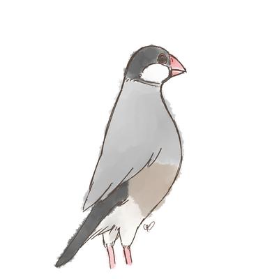 背伸び桜文鳥