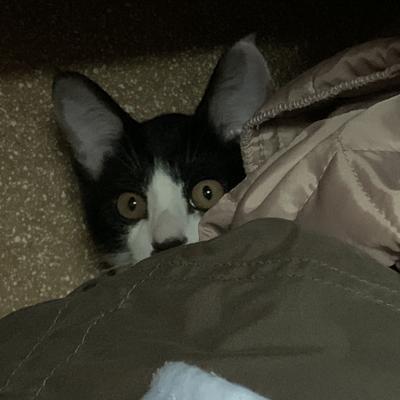 気付かれた猫
