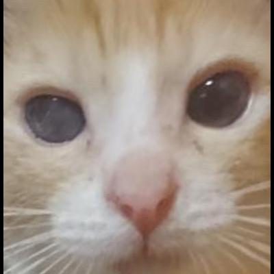 保護猫活動に全額寄付グッズ