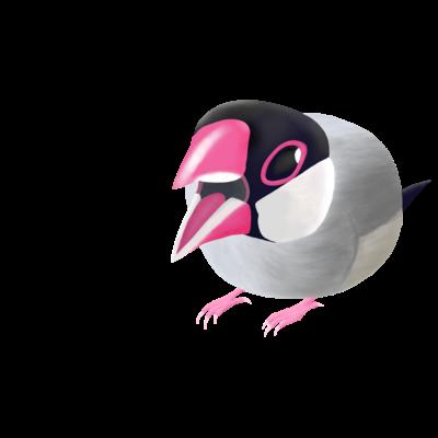激おこ!ぎゅるぎゅる桜文鳥