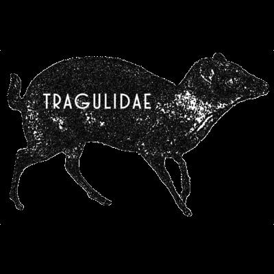 tragulidae (マメジカかわいい)