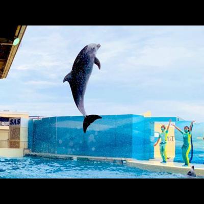 (コラボ)Dolphin Jump!(Photo by @gb_s8)