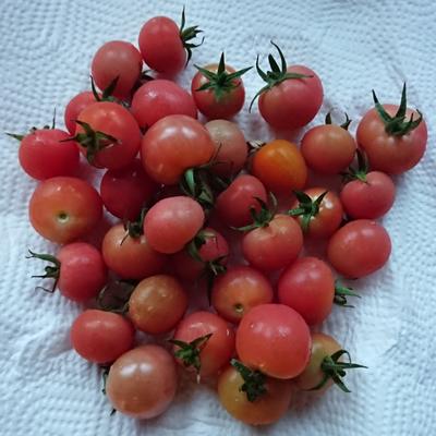 トマトが食べたかったのです。